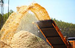Em 2016, biomassa é a segunda maior fonte de energia