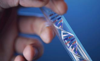 Melhorar geneticamente a resistência a doenças em suínos como estratégia para reduzir uso de antibióticos