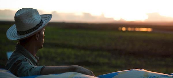 Santa Catarina encerra colheita de milho com incremento de 17% na produção