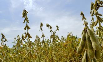Preços da soja estão 90% acima de um ano atrás