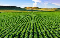 Valor da Produção Agropecuária é estimado em R$ 563,5 bi