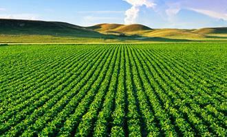 CNA aponta PIB agro de 9% em 2020 e estima alta de 3% para 2021
