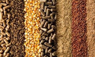 Previsão de Safra: IEA aponta boas perspectivas de produção e produtividade para os grãos em 2021
