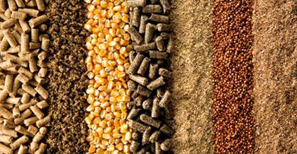 Santa Catarina quer investir na produção de cereais de inverno para alimentação animal