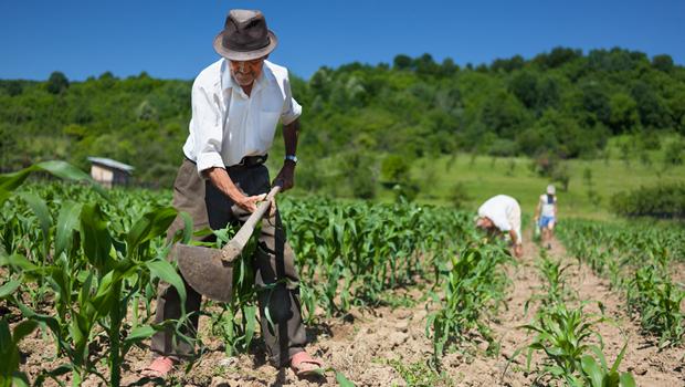 Agro contribui para expansão de empregos em junho, diz CNA