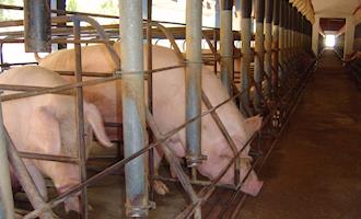 Comissão Europeia prepara diretiva sobre bem-estar animal