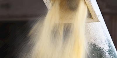 Peste suína e ração de trigo são ameaça para demanda por farelo de soja na China