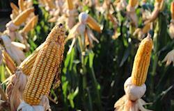 Comissão vai acompanhar andamento da Rota do Milho