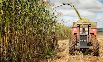 Mesmo com setor elétrico em alerta, bioenergia segue subaproveitada