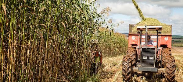 Embrapa e ABDI se unem para mapear e fortalecer o aproveitamento de biomassas do agronegócio brasileiro