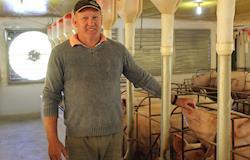 Plasson investe em suinocultura mirando conquistar 25% do mercado