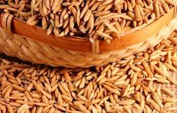 Casca de arroz vira eletricidade no Sul