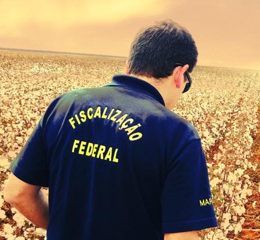 Avicultura e suinocultura não sofrem com paralisação dos fiscais agropecuários