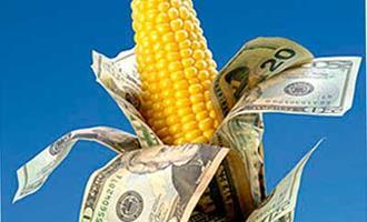 Alta do preço internacional do milho em Chicago já tem impacto total na produção de bovinos, suínos e aves