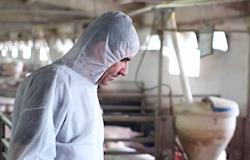 China inicia inspeções de emergência em fazendas após surto de peste suína