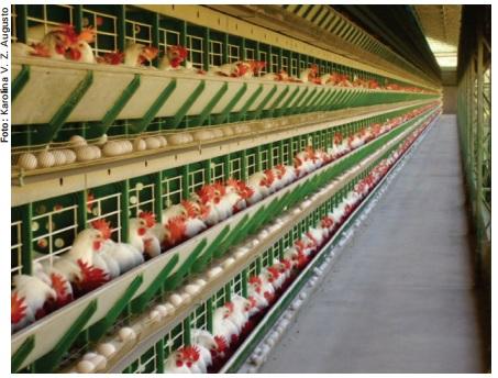 Tratamento de dejetos de aves poedeiras comerciais