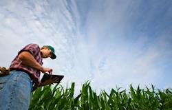 Software auxilia avicultores no uso de dados nutricionais e produtivos