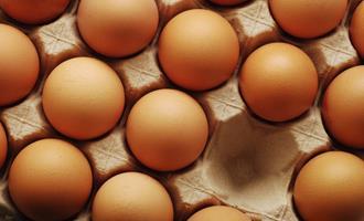 Preços dos ovos seguem estáveis em julho