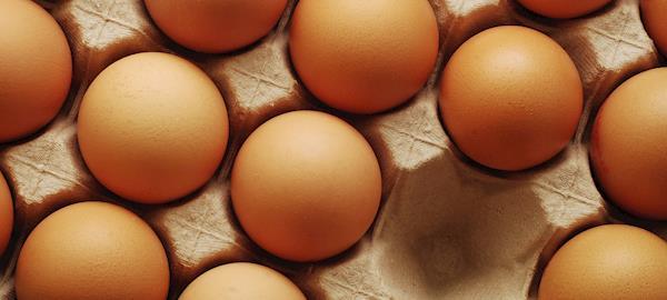 Inseticida que contaminou ovos na Europa é popular contra pulgas no Brasil