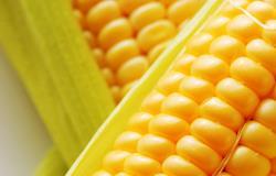 Comprador se retrai e preço do milho recua em SP