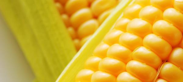 70% do milho 2ª safra do MS já foi colhido