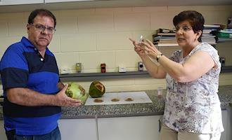 Pesquisa revela potencial energético da casca de coco