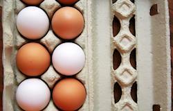 Exportações de ovos ganham forte ritmo neste início de 2018