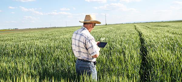 Os impactos positivos da Internet das Coisas no setor de agronegócio
