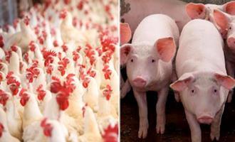 Exportação de carne suína em dezembro cresce; bovina e frango têm queda
