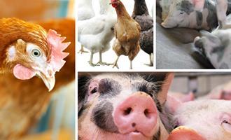Setor de Alimentação Animal projeta encerrar 2020 em torno de 5% de crescimento