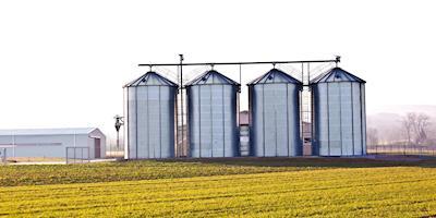 Milho e soja começam o ano com altas pelo país, aponta Cepea