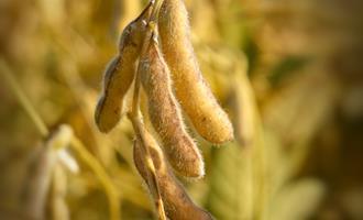 Instituições debatem verticalização da agroindústria em Sorriso no MT