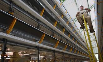 Avicultura capixaba desponta com tecnologia e ações inéditas