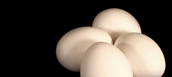 Pesquisa vai ajudar IOB a identificar quais são as dúvidas que ainda persistem sobre o ovo