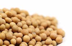 Maior demanda eleva cotações da soja no Brasil