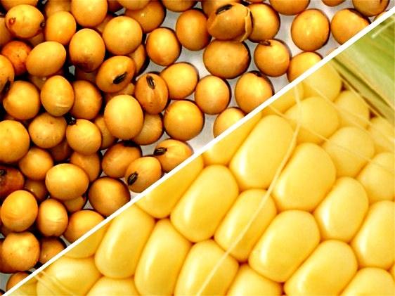 IBGE projeta queda de 21 milhões de toneladas para colheita de grãos