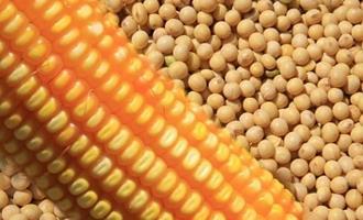 Zerar taxa da soja e milho é viável e pode segurar preço, diz Conab