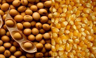 Argentina: milho ganha impulso inesperado devido ao bom clima na safra