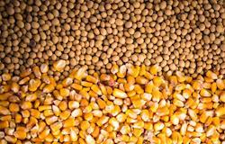 Preços do milho e da soja seguem em alta no país