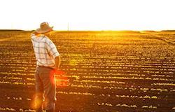 Projeções de longo prazo continuam favoráveis ao agro brasileiro - Marcos Fava Neves