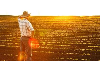 Queda no número de pessoas ocupadas na agropecuária é interrompida em julho
