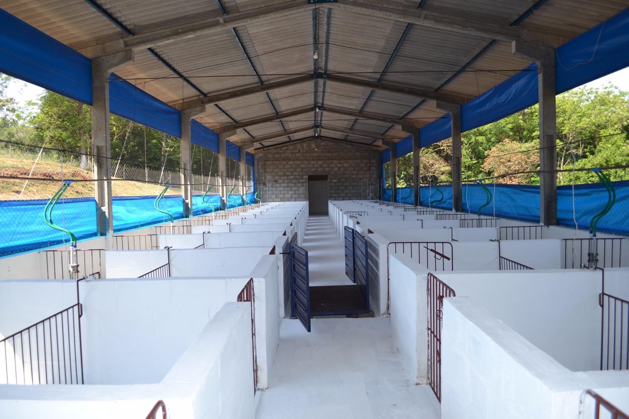 Centro experimental de pesquisas em nutrição de suínos é inaugurado em Londrina