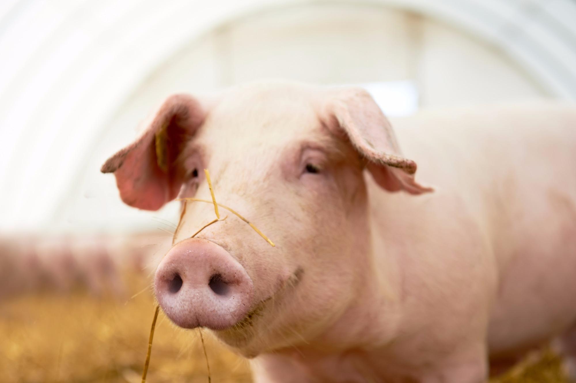 Santa Catarina exportou 1,4 milhões de toneladas de carne suína e de frango em 2018