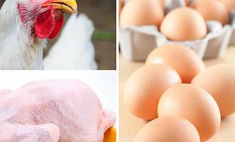 Em São Paulo preço do frango cai e dos ovos registram alta