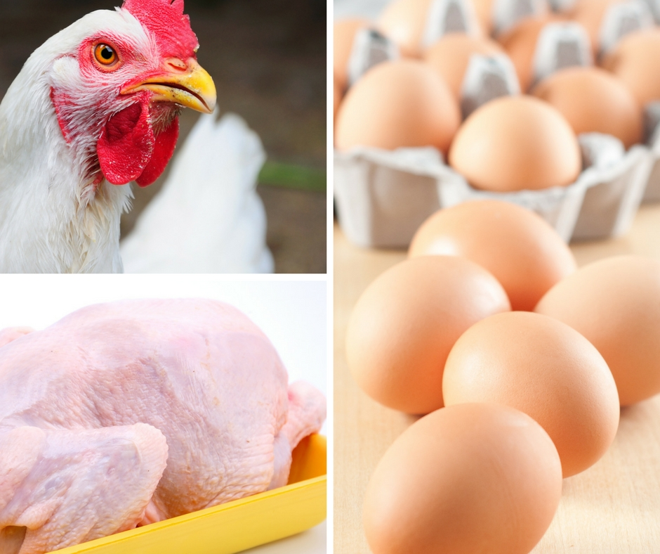Produção de frango em SP tem redução de 11,1% em 2018 aponta IEA