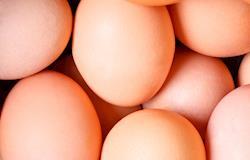 Inscrições abertas para o 2º Concurso de Qualidade de Ovos Capixaba