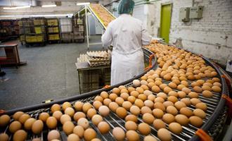 Exportações de ovos mantém alta de 142,5% no 1°Trimestre