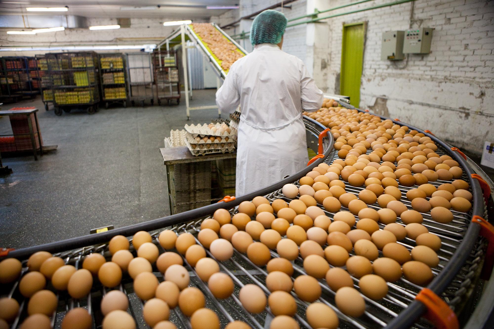 Brasil é sétimo maior produtor mundial de ovos
