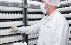 Instituto Butantan usará 60 milhões de ovos para fazer vacina da gripe