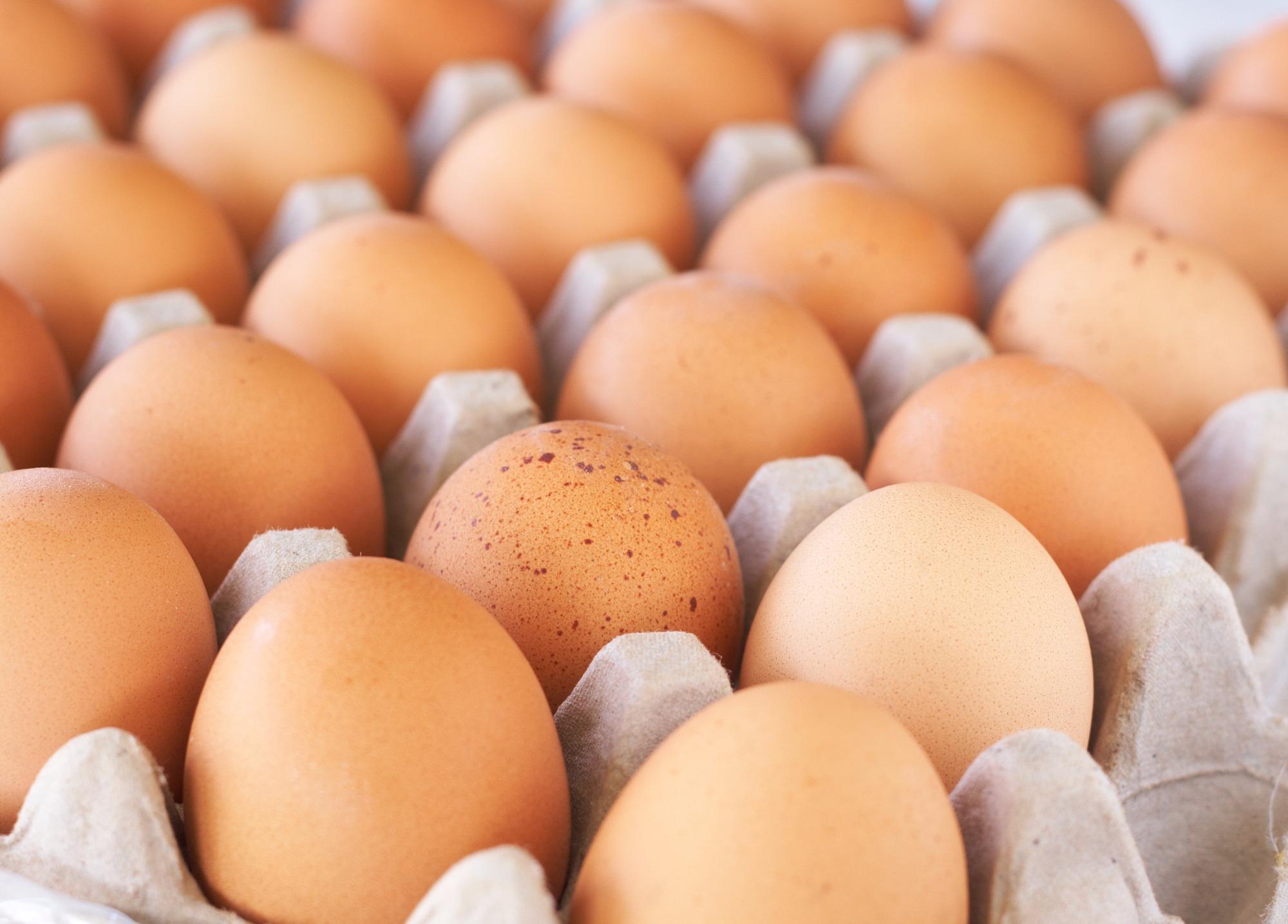 Exportações de ovos começam a cair e preços sobrem no mercado interno